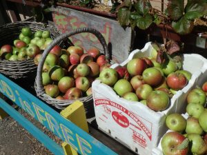 hidden orchard apples at food is free laneway