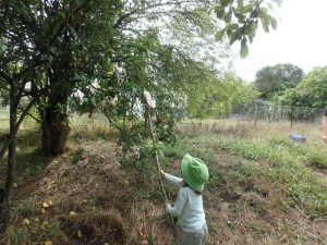 hidden orchard child extension picker