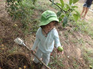 hidden orchard Pepper apple