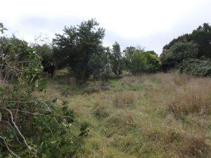 hidden orchard eureka st wild garden