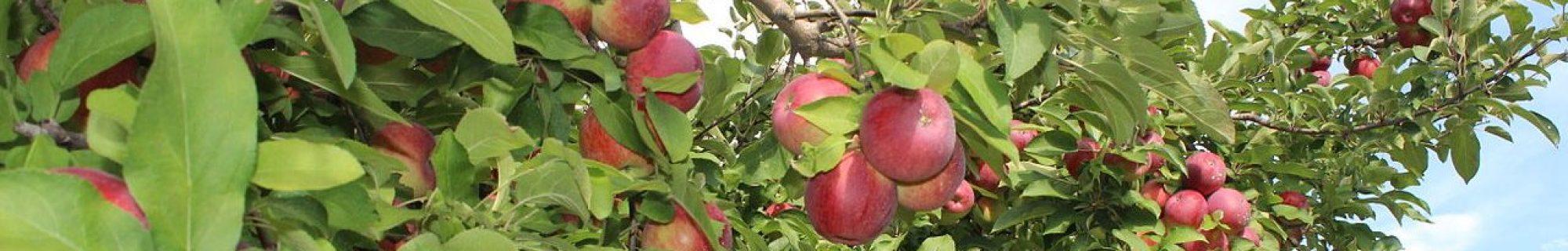The Hidden Orchard