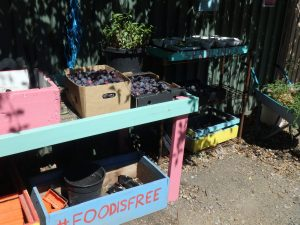 Hidden Orchard plums at Food is Free laneway