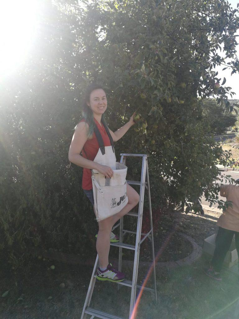 Ellen Burns apple harvest The Hidden Orchard